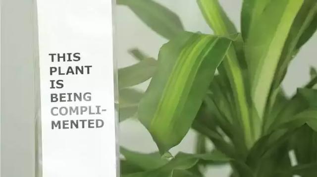 语言竟如此有力量!宜家做了个实验,当你欺负一盆植物,30天后竟发生了.......
