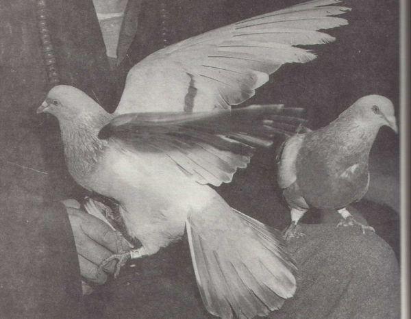 宣化上人在解释这两只鸽子是他唐朝的两个出家弟子时落泪了